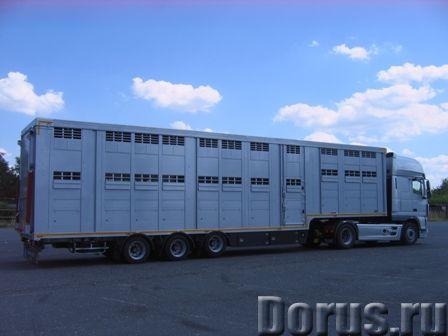 Полуприцеп для транспортировки живого скота - Сельхоз и спецтехника - Изготавливаем полуприцепы для..., фото 1